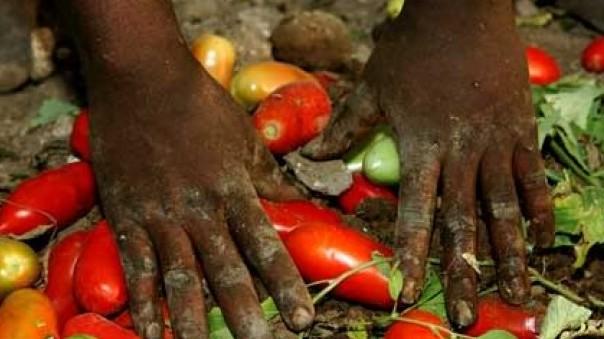 Caporalato: operativa da oggi la Rete del lavoro agricolo di qualità