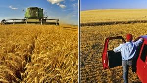 Giovani e agricoltura, Scalia (Pd) presenta ddl per favorire cooperative under 40 scritto da Itis di Cassino