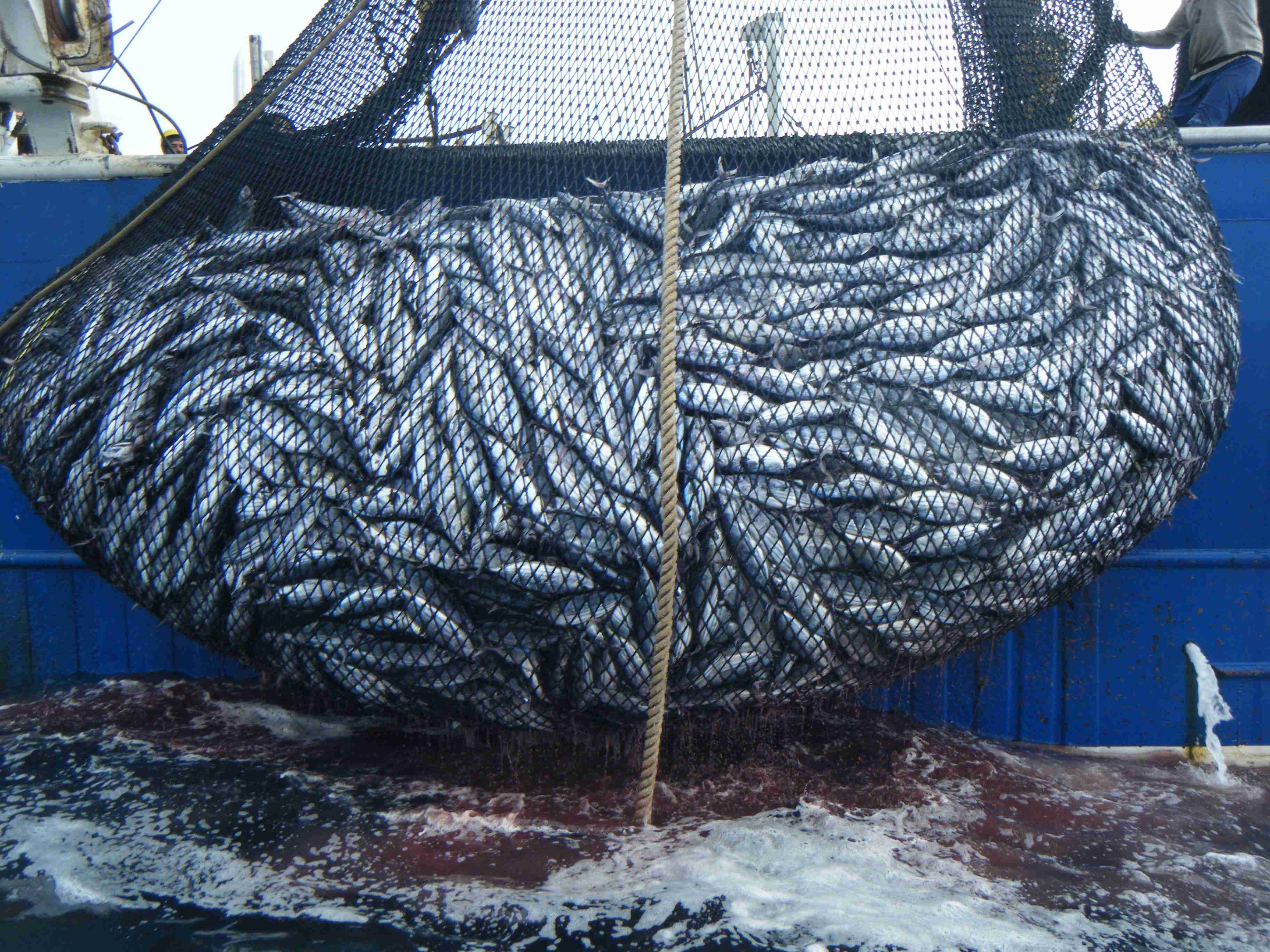 Pesca e acquacoltura insieme per il made in Italy: i risultati del programma Mipaaf, Api e Federpesca