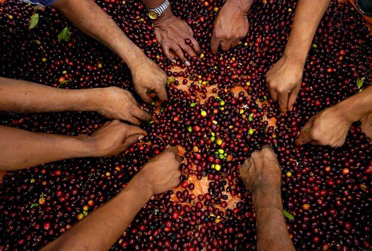 Inizia l'era SPID per gli agricoltori italiani: una sola chiave di accesso alla PA